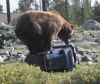 Bear-resistant carts