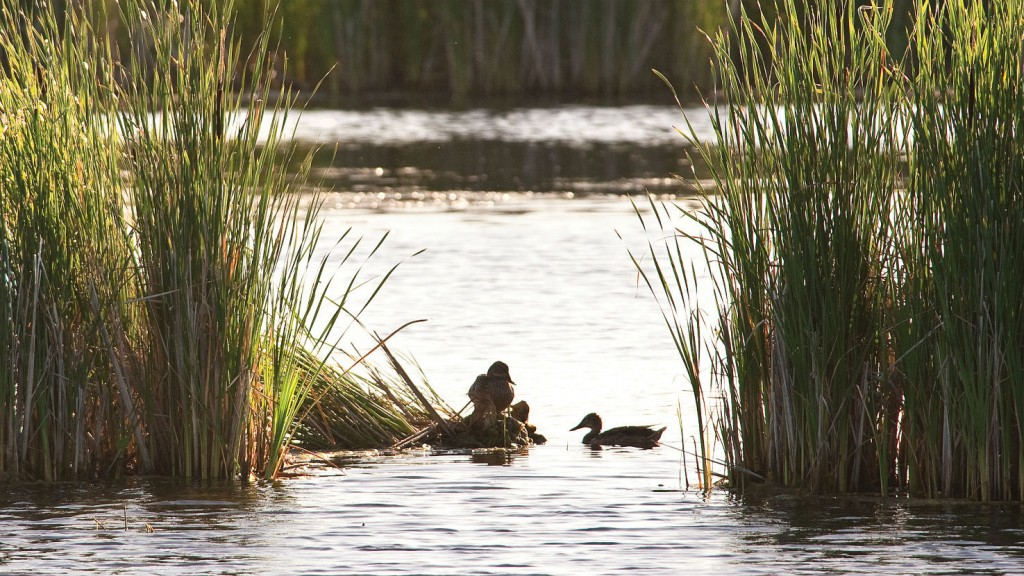 Pembina partners with Ducks Unlimited for prairie wetlands