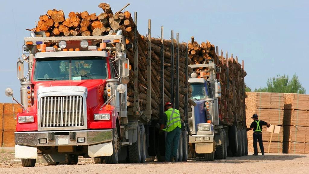 Two logging trucks