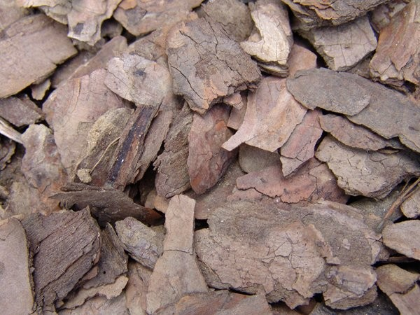 Wood waste biomass will be used to power a new waste to energy system in northeastern BC.